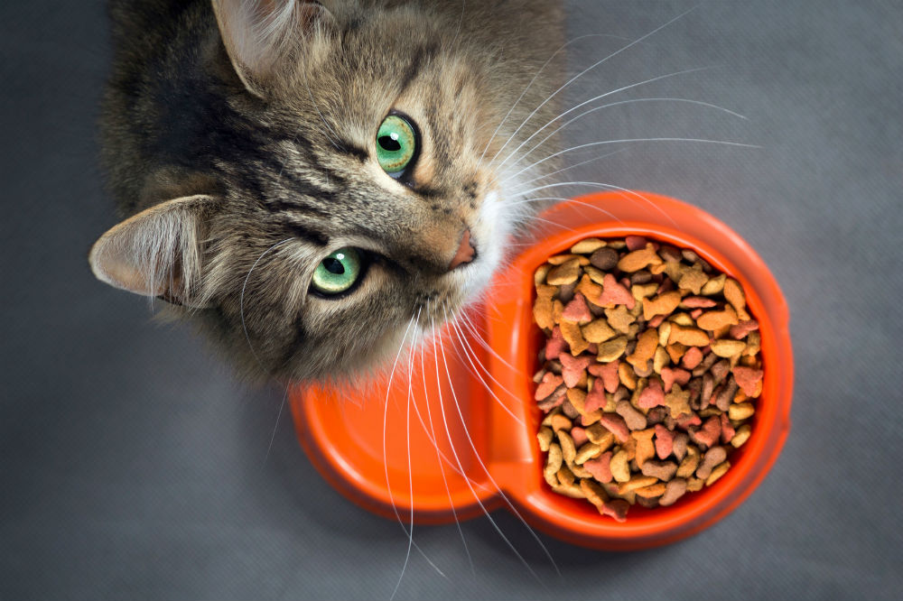 DIY Automatic Cat Feeder Is It A Good Option For You