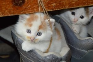 5 Great Cat Bloggers to Check Out.